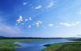 تركيه العمري : ابحث عن حرية الفرح والعصافير